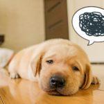 子供から突然「英語の習い事やめたい」嫌がる4つの原因と正しい対応は?