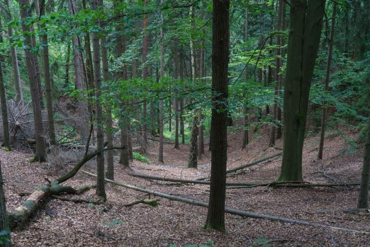 Waldweg hoch zur Bastei
