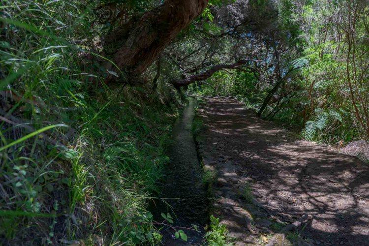 Urwaldfeeling bei der Wanderung in Rabacal