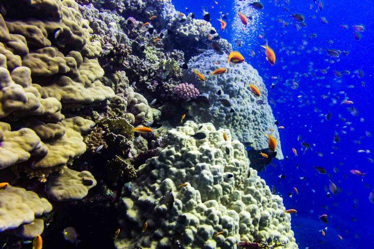 Kunterbuntes Korallenriff