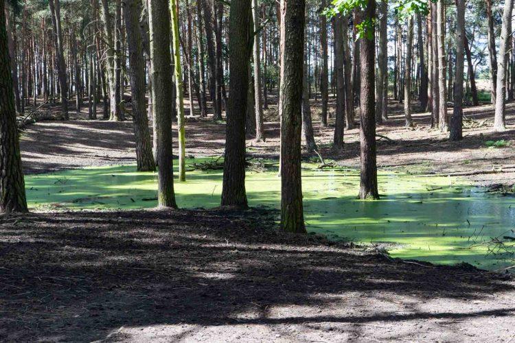 Ausflug in den Wildpark Schorfheide