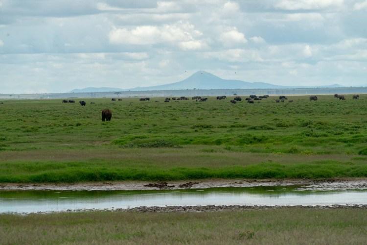 Elefantenherde in Amboseli
