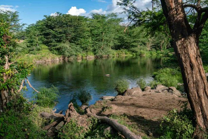 Mzima Springs in Tsavo West