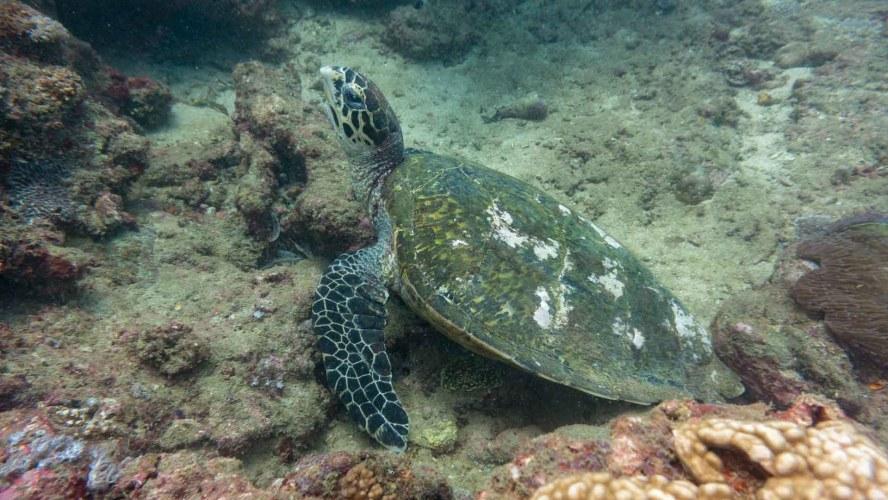Bild einer Schildkröte
