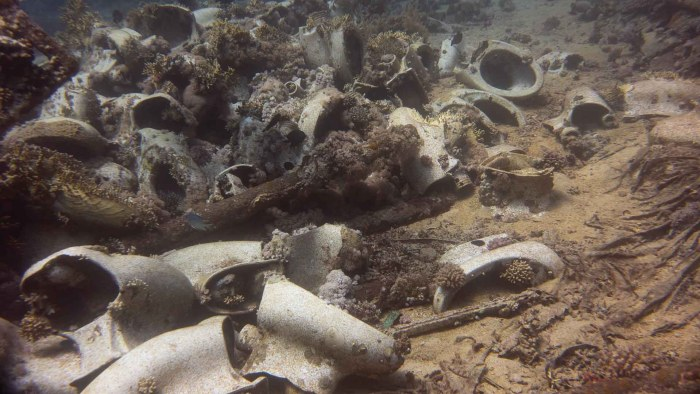 Kloschüsseln auf dem Meeresgrund am Shark Yolanda Reef