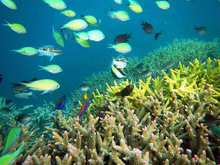 gili-islands-buceo