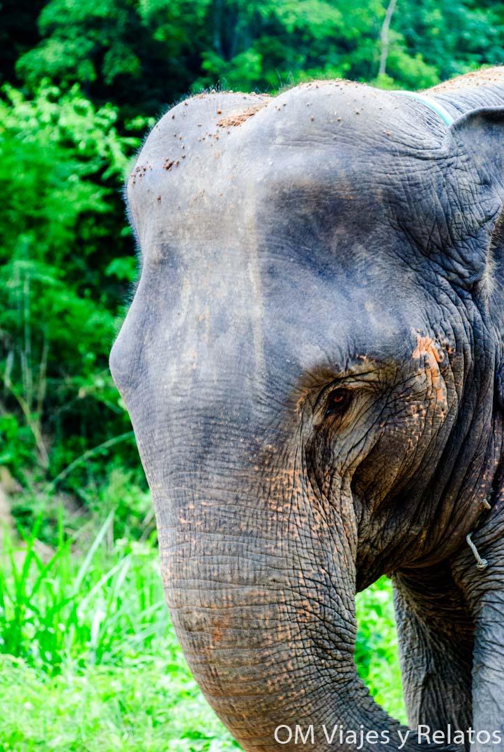 excursiones-elefantes-en-Chiang-Mai