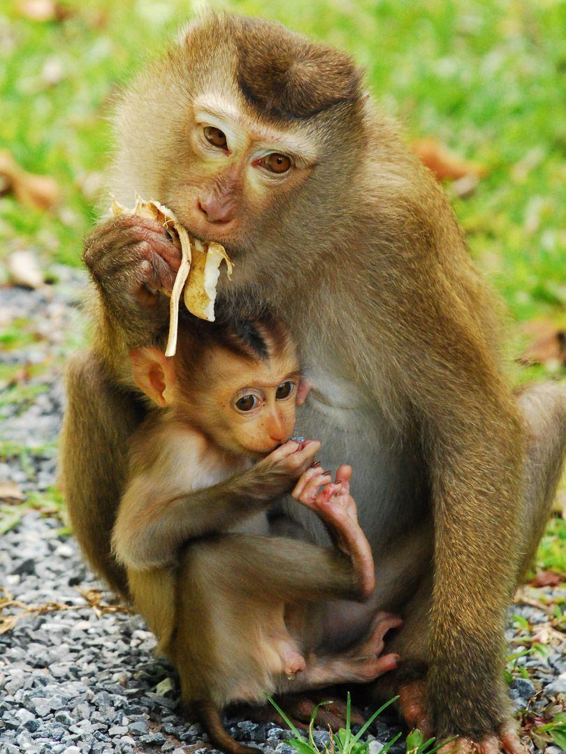 parques-naturales-Tailandia