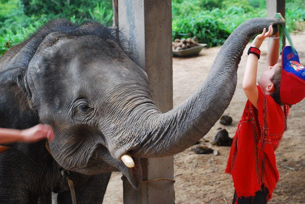 elefantes-Tailandia-excursiones-con-niños