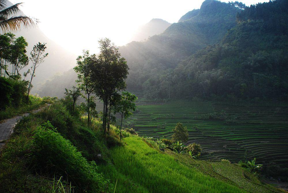senderismo-por-los-arrozales-de-Java-Indonesia