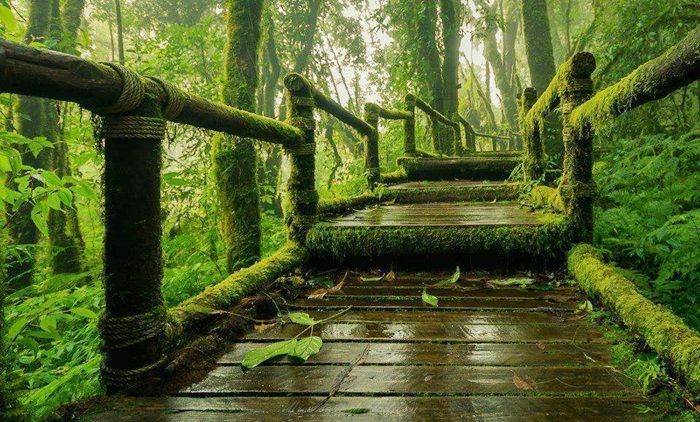 Ang-Ka-Luang-Nature-Trail-trekking-doi-inthanon