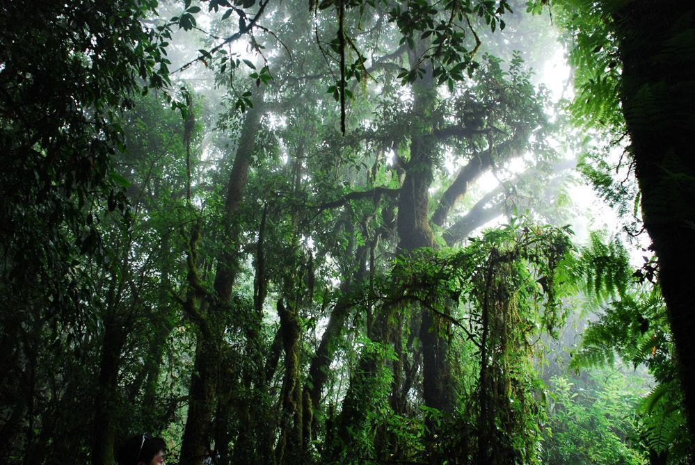 senderismo-Chiang-Mai-parques-nacionales-Tailandia
