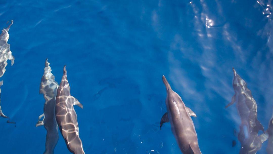 delfines-Maldivas