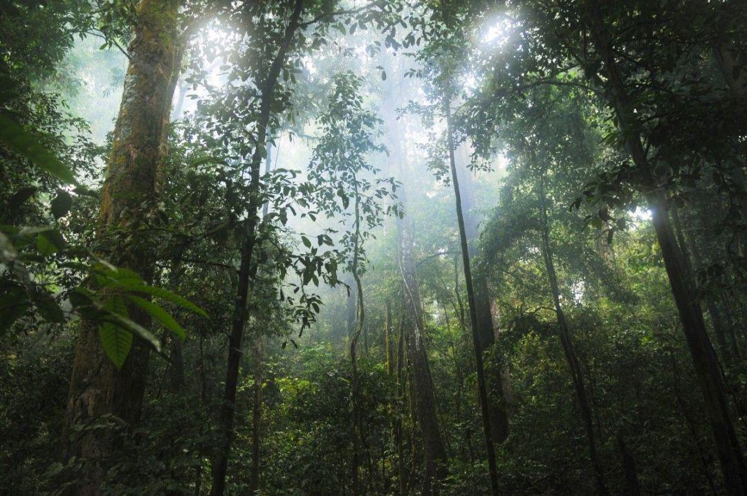 libro-de-la-selva-India
