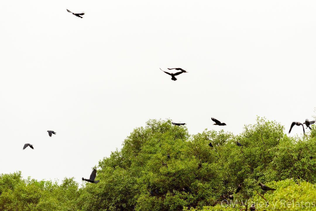 Kerala-reserva-Aves