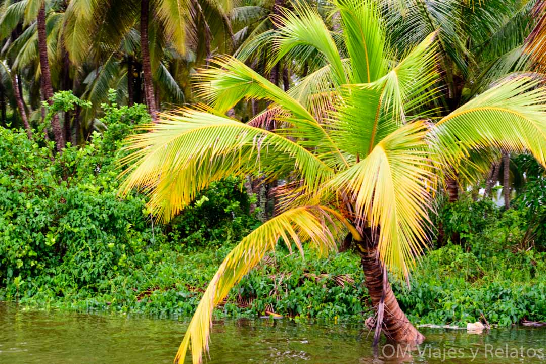 los backwaters de la India