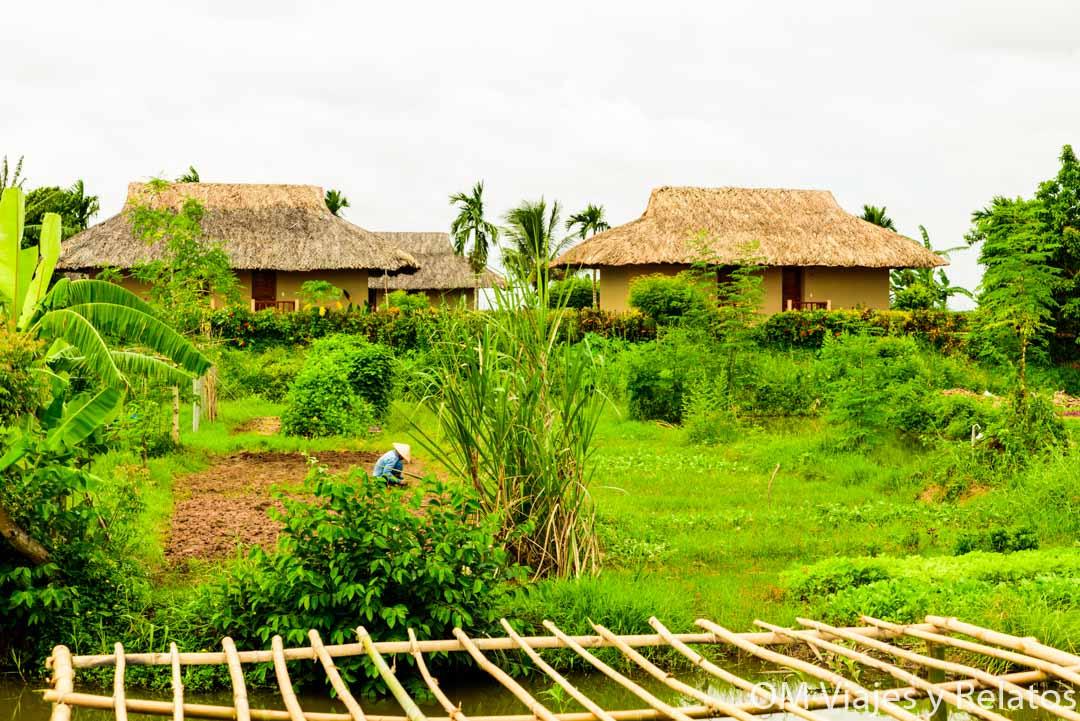 arrozales-Mekong