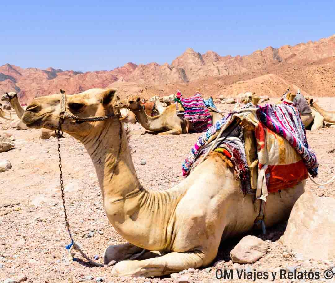 safari-Egipto-Mar-Rojo