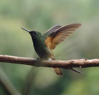 Bird ID 1