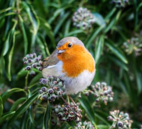 Bird ID 12