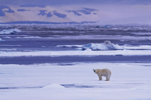 Saving the Arctic with Greenpeace