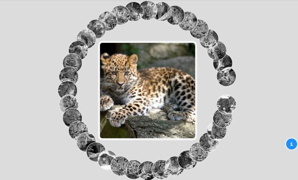 amur leopard css image/photo gallery