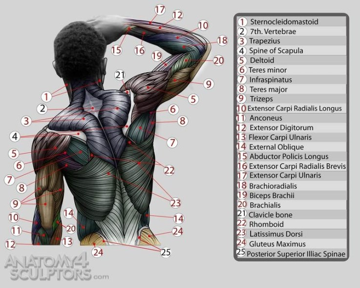 m_8762580_anatomy