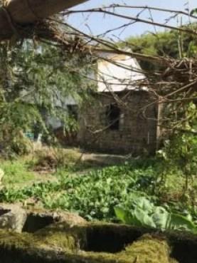 An abandoned hut near a vegetable garden in Moganshan, Zhejiang, China
