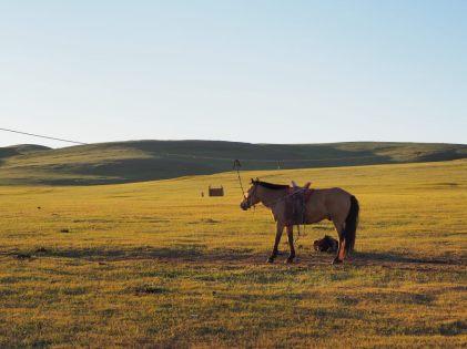 Le cheval du camp