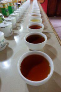 Dégustation de thé à la plantation