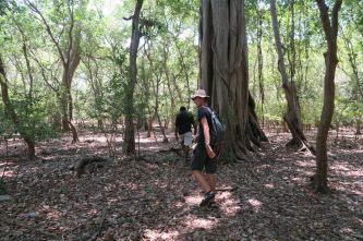 On coupe à travers la jungle pour accéder au site...