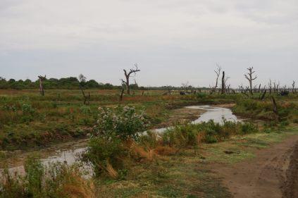 Paysages du parc, alors qu'on progresse dans le lac asséché : les troncs d'arbres sont habituellement recouverts d'eau