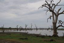 On peut remarquer le niveau d'eau sur le tronc d'arbre...