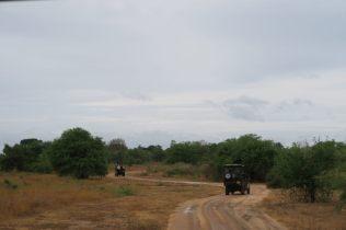 Les jeeps qui arpente les pistes du parc