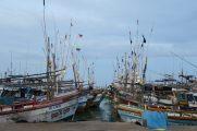 Les proues face à face au port de Tangalle