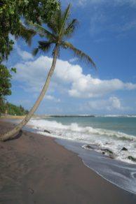 Cocotier sur la plage de Mirissa