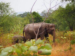 Une maman éléphant et son éléphanteau