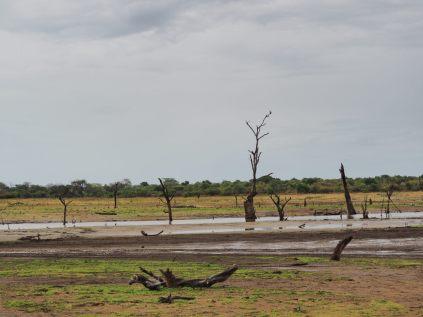 Les arbres du lac asséché