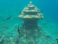 Des coraux et poissons ont élu domicile sur le temple