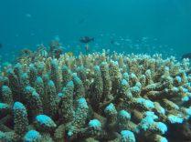 Vue sur les coraux et les poissons nageant au dessus