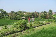 Un passage très étroit dans une rizière de Canggu. Le passage servait aussi pour les motos ! Dans les deux sens...