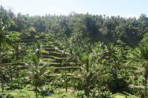 Rizières de Tegalalang