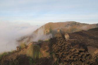 Les singes au bord du cratère