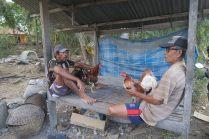 Deux hommes avec leurs coqs, Nusa Lembongan