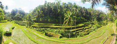Panorama des rizières de Tegalalang