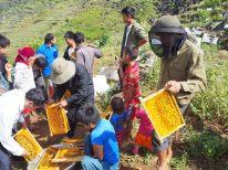 Récolte du miel au passage d'un col