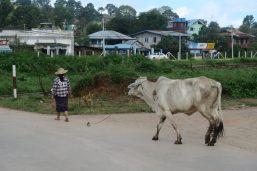 Une paysanne et sa vache