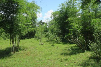 La forêt de bambou avant le lac Inle