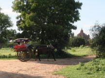 La charrette, un autre moyen de découvrir la plaine de Bagan