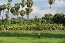Un paysan à Inwa
